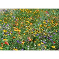Wildflower Mix TX/OK
