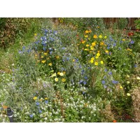 Wildflower Mix TX/OK Ezee Bloom